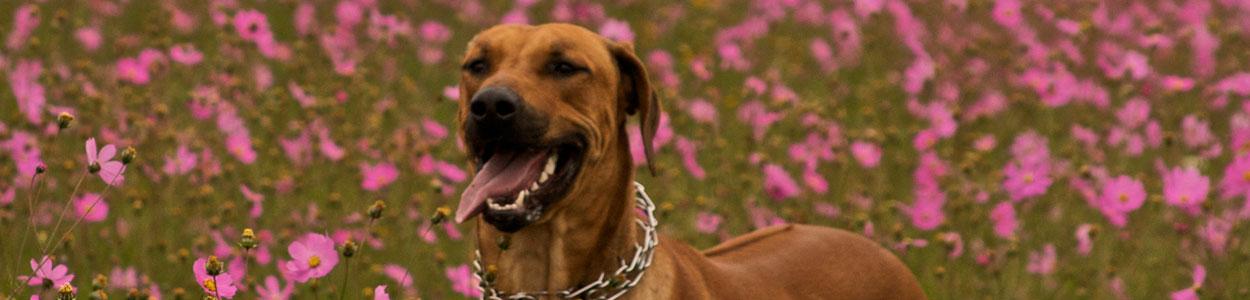 _¿Eres el mejor amigo de tu perro?_