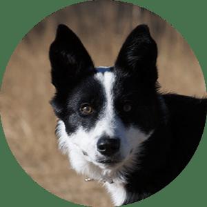 Tu perro en Dangú