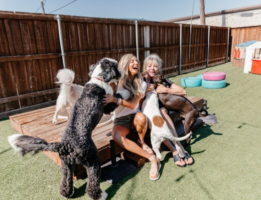 dani austin adopt a dog dallas