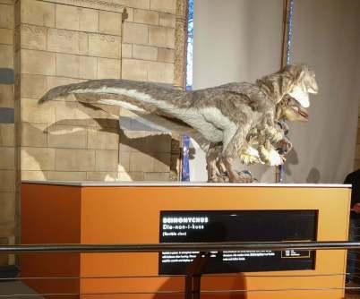Dsinonycnus at Natural History Museum London