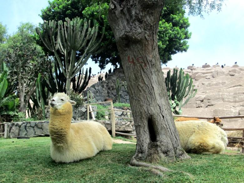 zoologico de lima - parque de las leyendas - peru