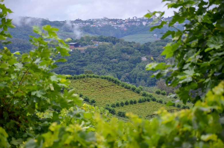 vale dos vinhedos - vinícolas - bento gonçalves