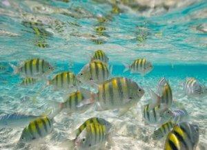 8 fondali marini dove fare le immersioni