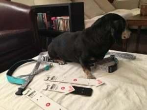 come personalizzare il look del tuo cane