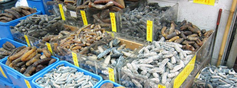 Autoridades deben difundir el nuevo marco legal sobre la pesca en México: Daniel Ávila Ruiz