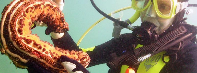 Saqueo de pepino de mar es delincuencia organizada: PAN*