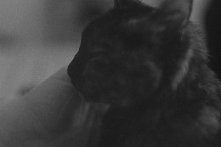 Lomography Lady Grey in Rodinal 1+50