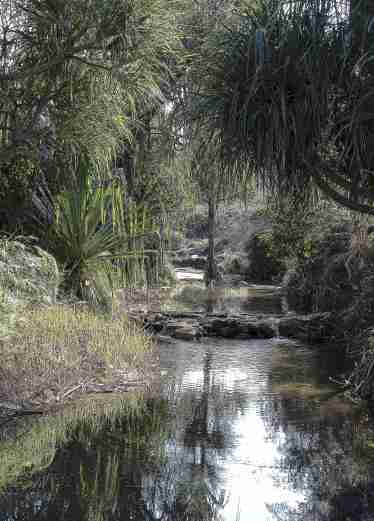 Isalo National Park Oasis