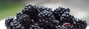 frutas-vermelhas-amora-preta-Blog-Daniele-Leite