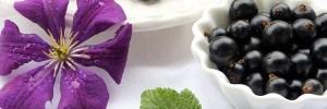 frutas-vermelhas-groselha-Blog-Daniele-Leite