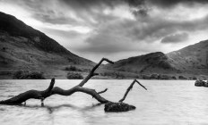 Branch in water, Buttermere.