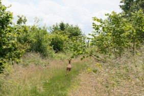 North Downs diary June 2016-8136