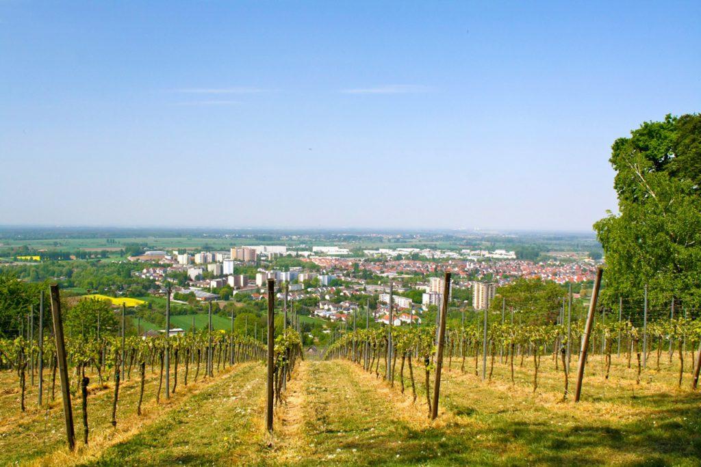 Duft-Reisende – Blick vom Weinberg aus über die Stadt