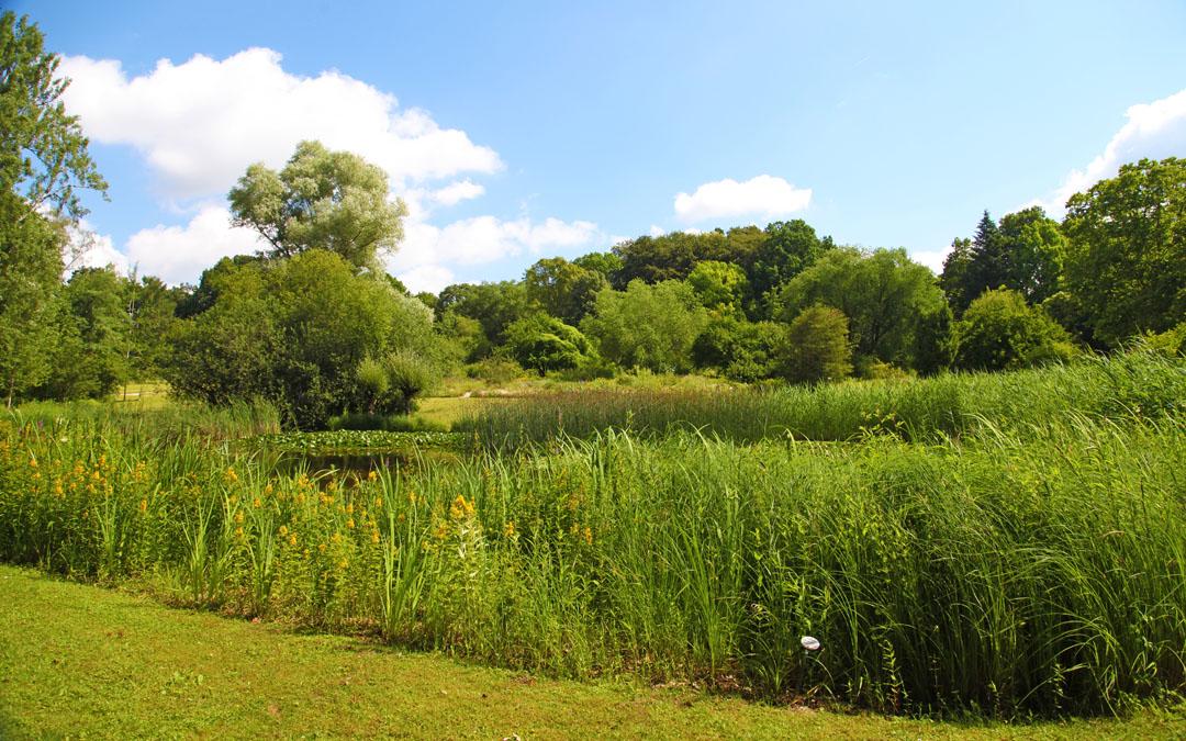 Grüner Geheimtipp – der Botanische Garten Frankfurt