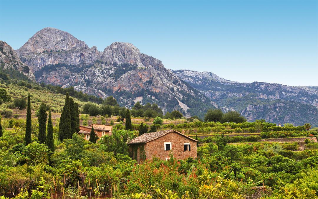 Zitrusparadies und die Orangen von Sóller auf Mallorca