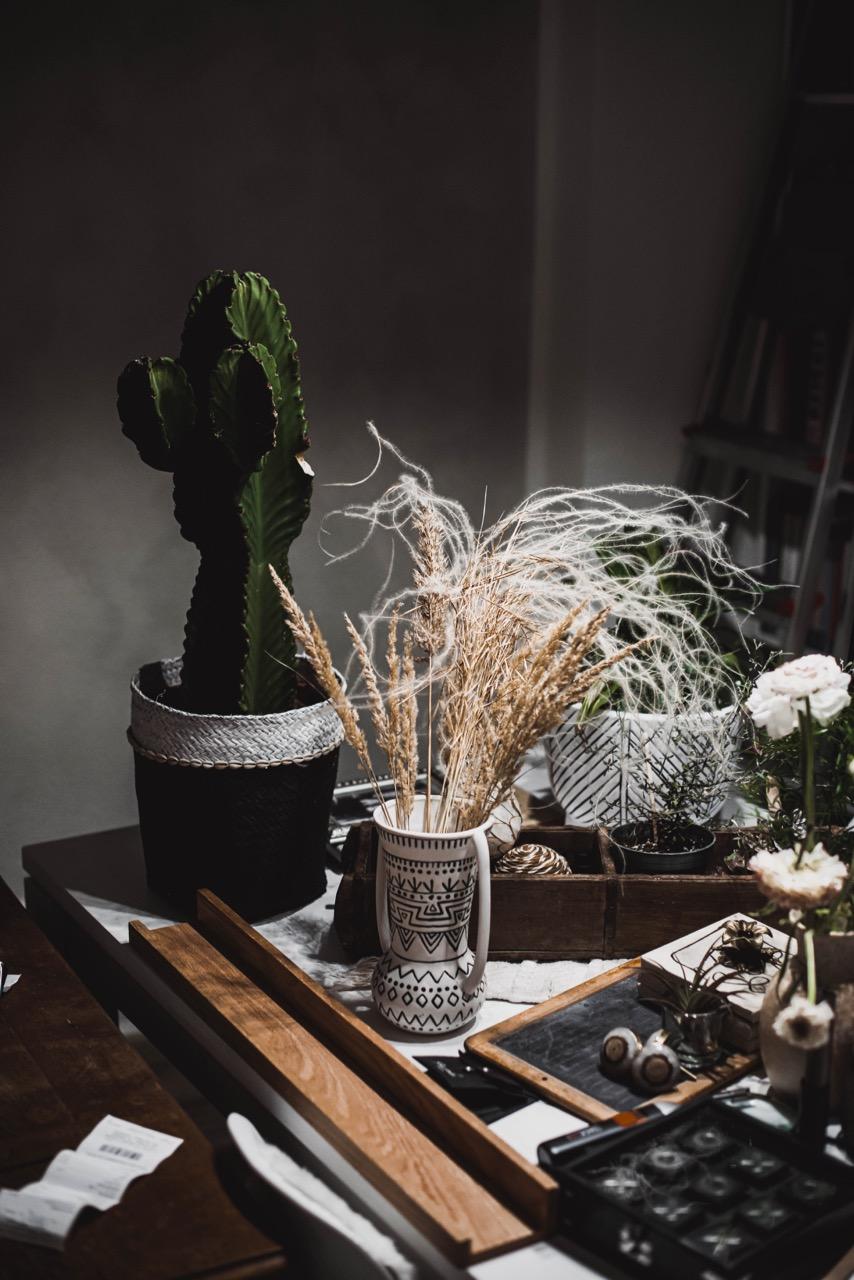 Kaktus und Dinge