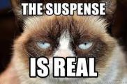 suspense grumpy cat