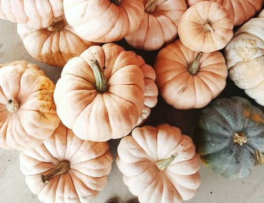 fall cinderella pumpkins