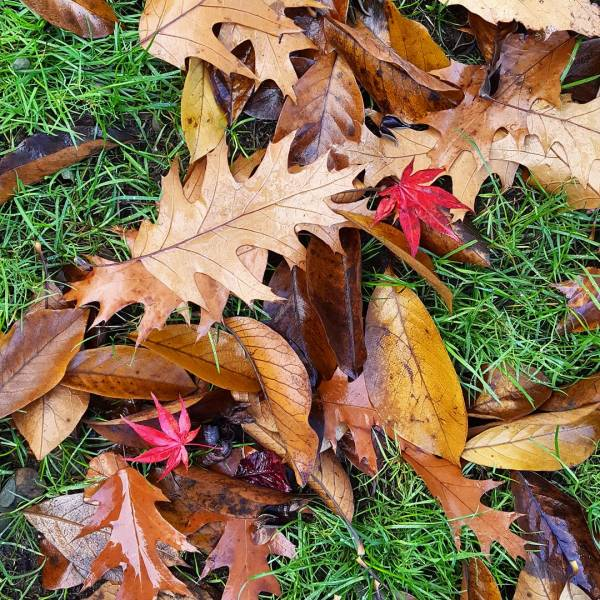 fall-leaves-letting-go