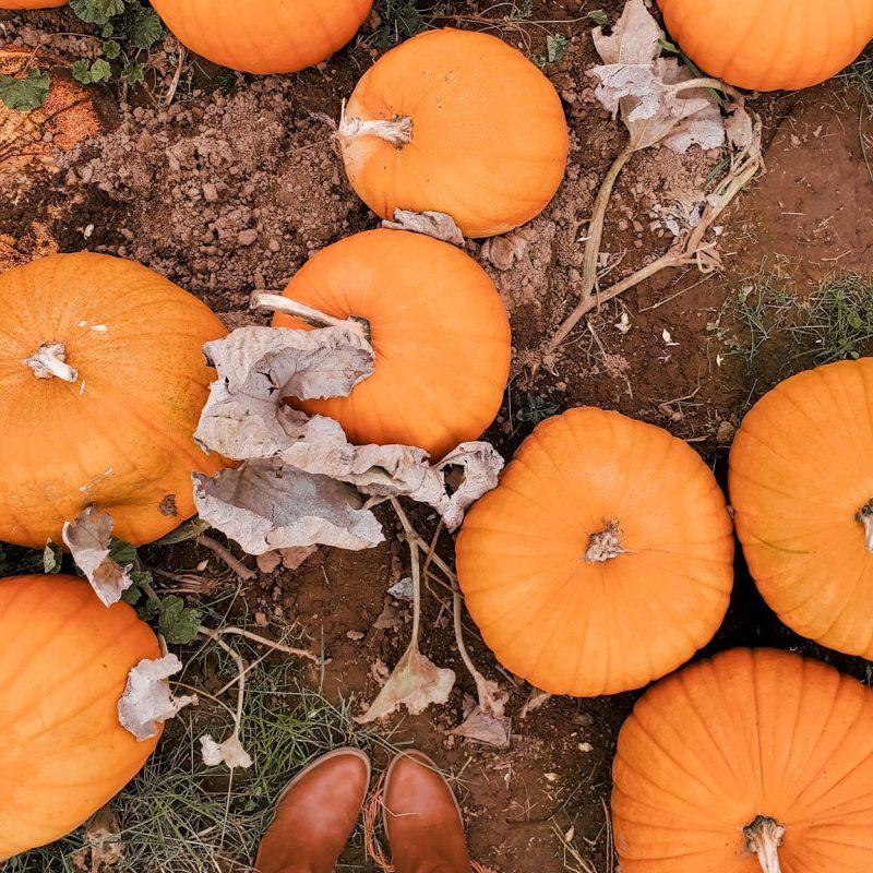 pumpkins fall what i learned 2019 - danielle comer blog