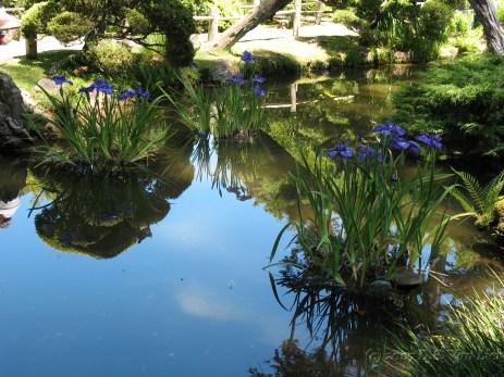 SF Japanese Garden 2007 (1)_1