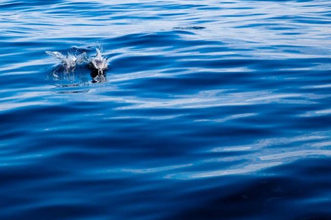 Dolphin Watching - San Diego 2014