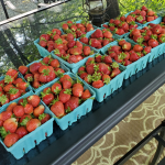 Save Money – Pick Your Own Strawberries (Plus declicious ideas to use them up!)