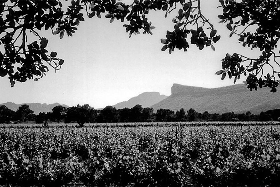 Photographie panoramique Pic-Saint-Loup