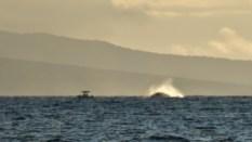 Maui (167 of 2119)