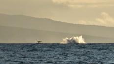 Maui (168 of 2119)