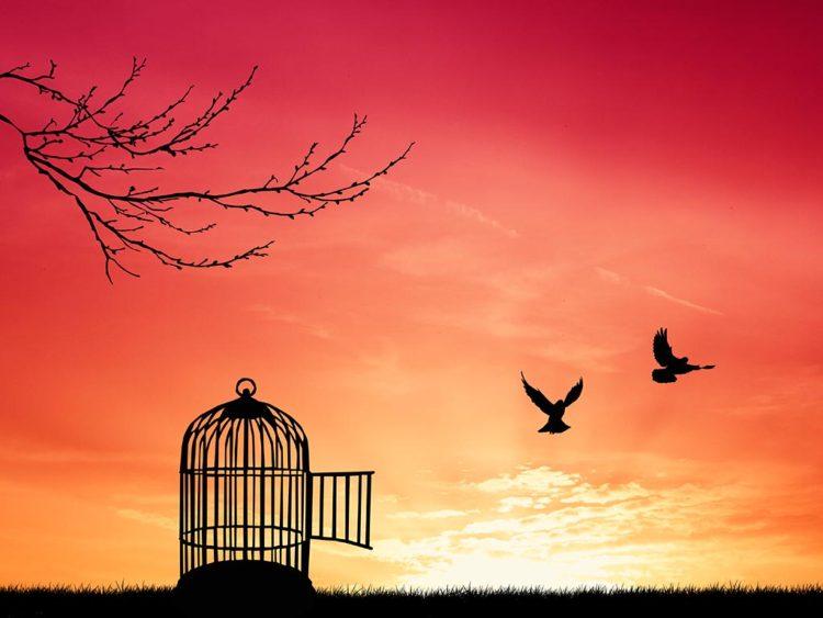 birds-set-free