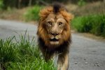 How to Fulfil Your Potential - The Stories of the Eagle and the Lion