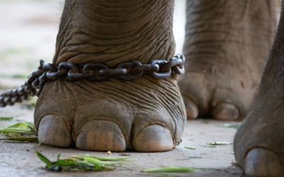 The Elephant and The Peg – an Analogy About Your Mind