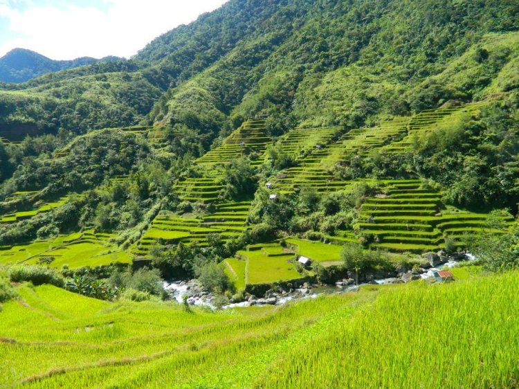 Rice terraces of Kadaclan, Barlig