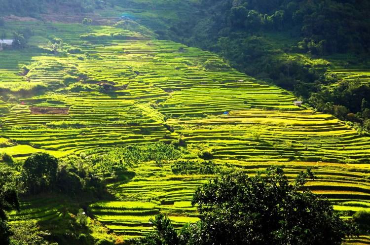 Nagacadan Rice Terraces of Kiangan. One of the tourist spots of Ifugao.