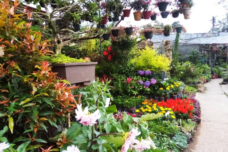 Orchidarium in Burnham Park.