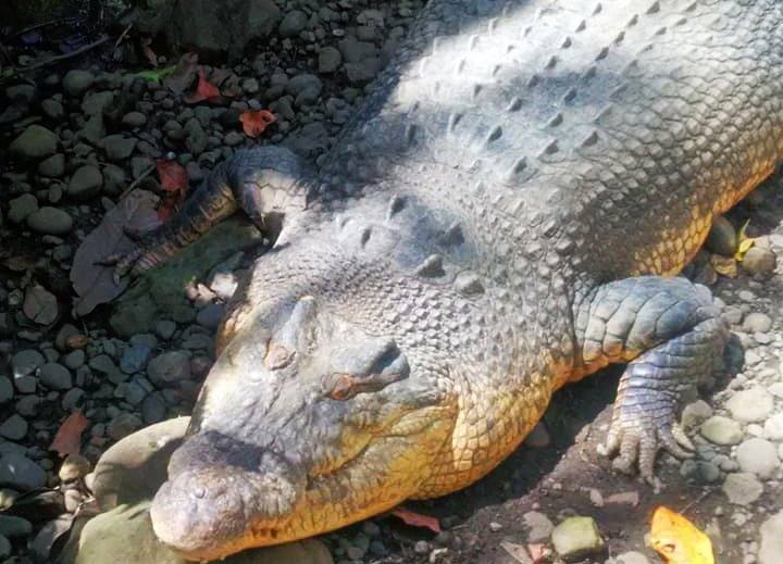 Crocodile Park. One of the tourist spots in Davao City.