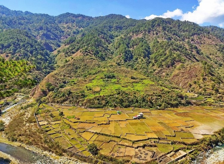 Visitors will pass on these rice terraces when trekking to Mt Kalawitan