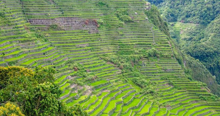Batad Rice Terraces just after the planting season