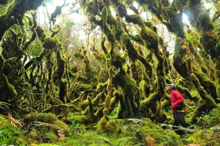 Mt Pandadagsaan is one of the most beautiful tourist spots in Mindanao