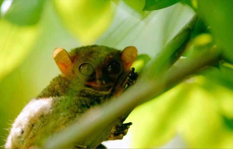 Tupi Tarsier Sanctuary is one of the best South Cotabato tourist spots