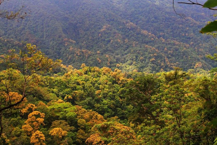 Northern Negros Natural Park is one of the best Negros Occidental tourist spot/destinations