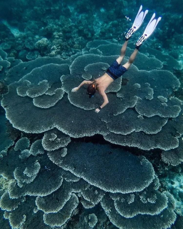 Danjugan Island is one of the best Negros Occidental tourist spot/destinations