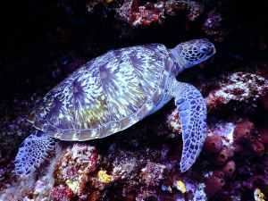 Snuba Diving Hawaii