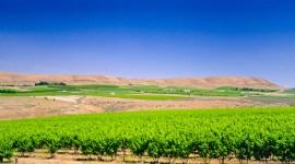 Red Mountain Vineyards | Washington State Appellation
