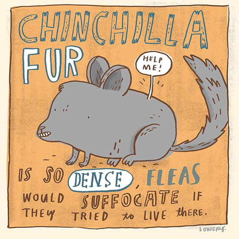 Chinchilla fur is so dense, fleas would suffocate if they tried to live there