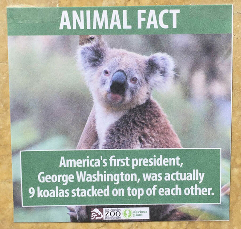 George Washington was 9 stacked koalas