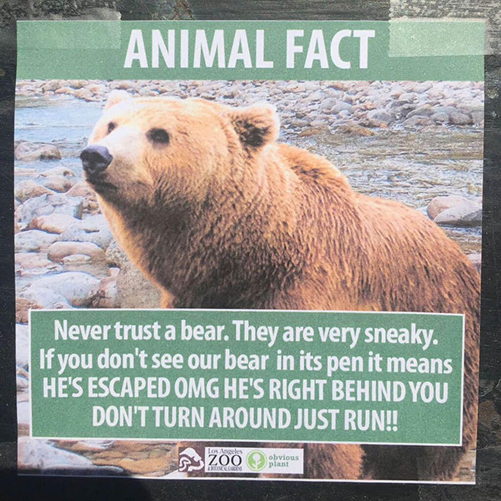 Fake animal facts: Bears are sneaky