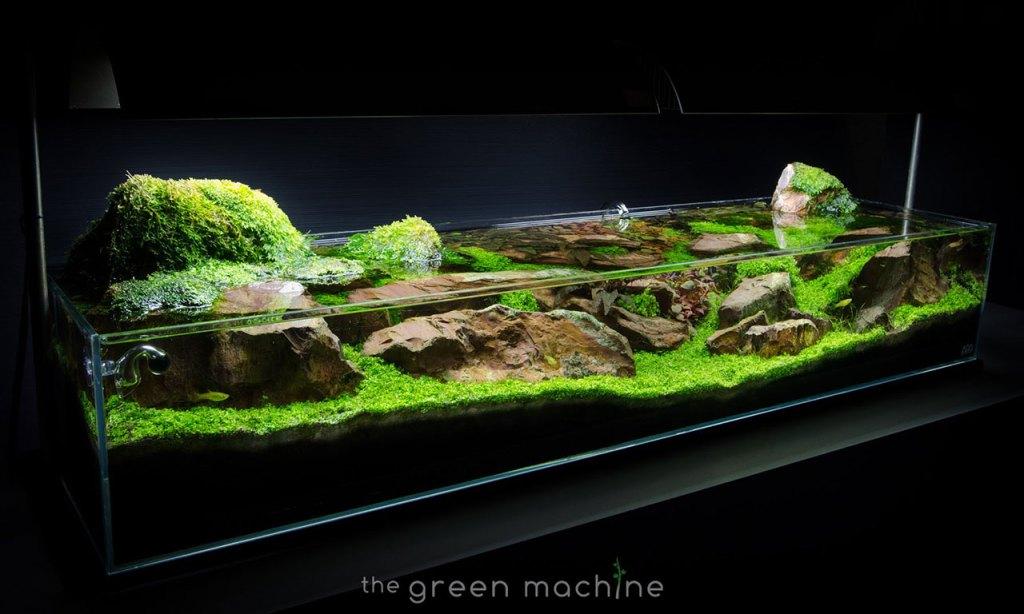 Discover the art of aquarium decorating