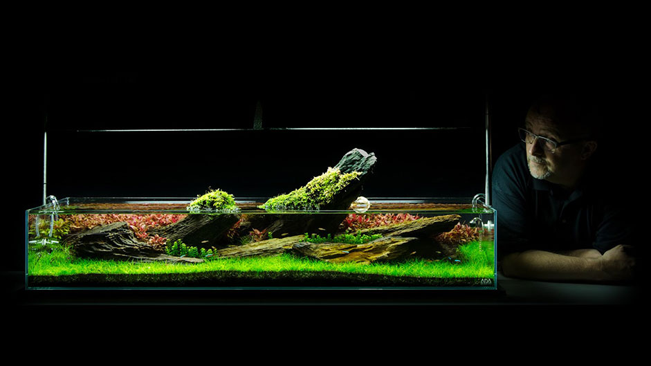 Discover the art of aquarium decorating